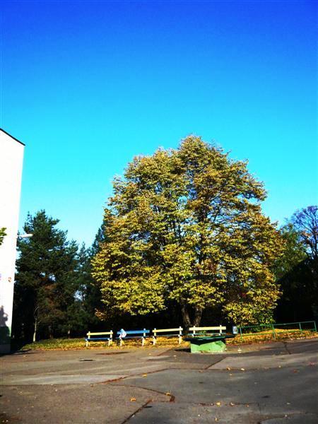 Příběh naší lípy – celopražský projekt o stromech kolem nás.